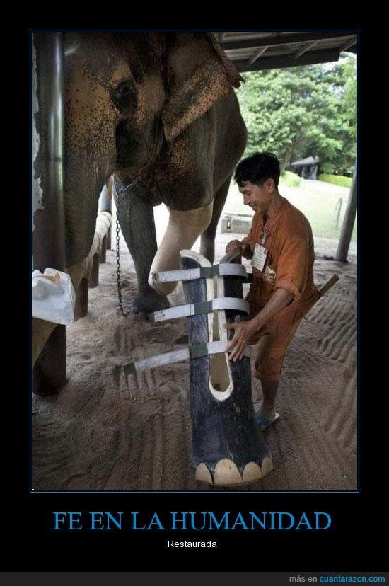 Elefante,fe,humanidad,pata,protesis