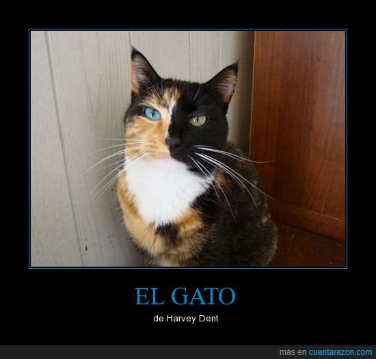 batman,dos caras,gato,harvey dent