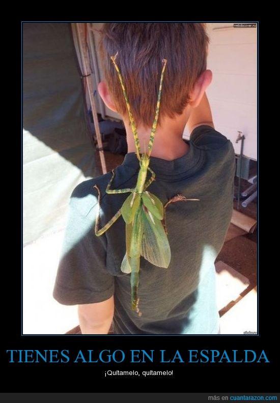 asco,espalda,insecto,miedo