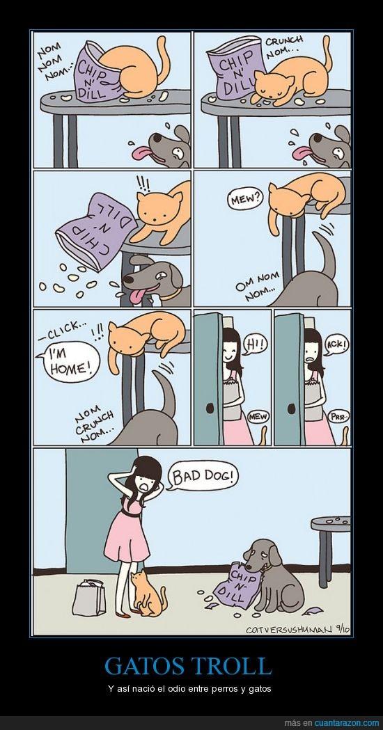 bronca,comic,disimulo,gato,perro,rompe,troll