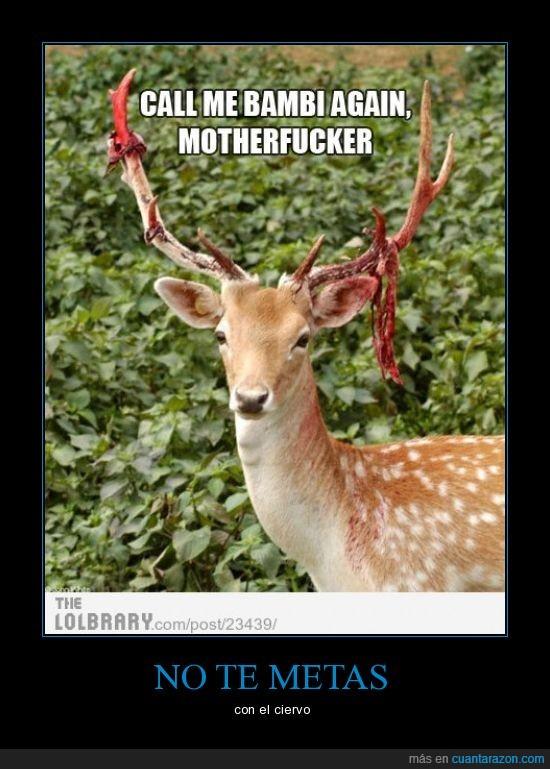 asesino,asta,ataque,ciervo,cornamenta,cuerno,no le gusta,no le llames bambi,sangre