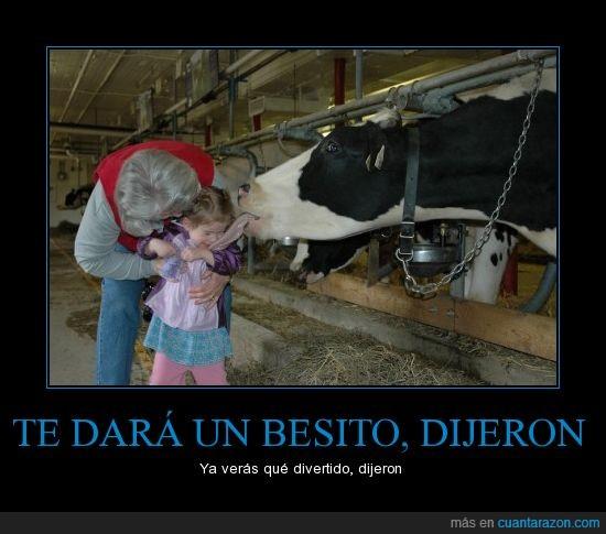 niña,pedazo lengua,vaca dando un beso