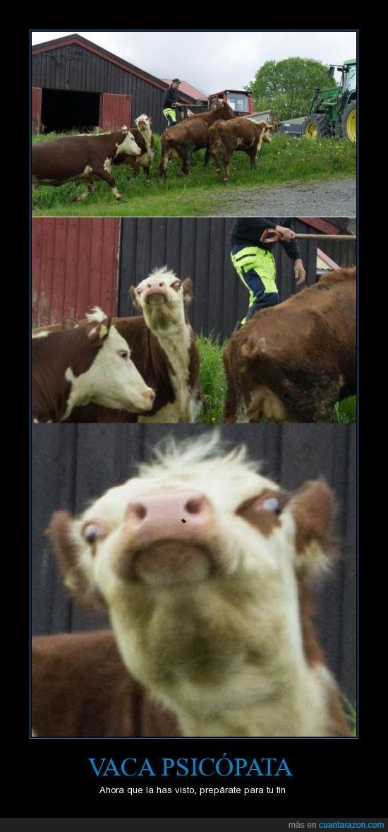 psicópata,se parece al perezoso de Ice Age,vaca,vas a morir