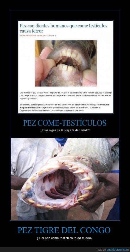 come-testículos,congo,peces raros,pez tigre,terror