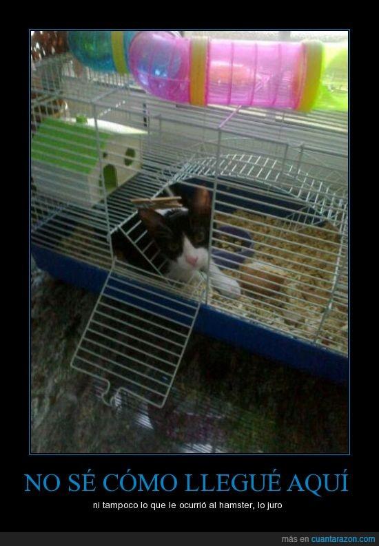 comer,gata,gatos,graciosa,hamster,jaula,luna,meterse