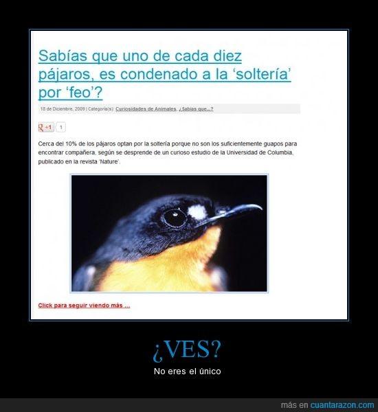 aves,feo,forever alone,pajaros,soltero