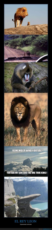 mufasa,piedra,pumba,rafiki,realidad,rey leon,simba,timon