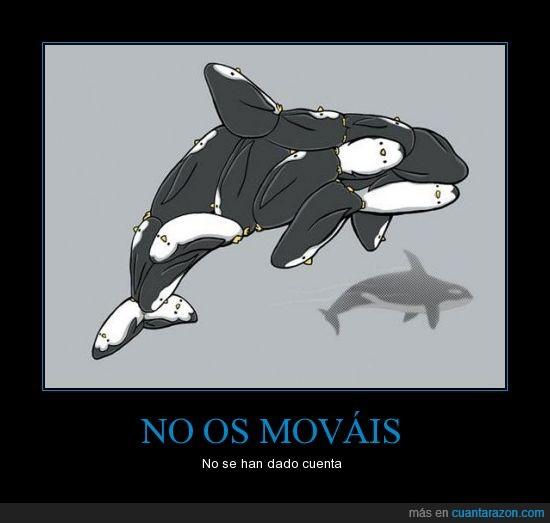darse cuenta,no moverse,orca,pingüinos