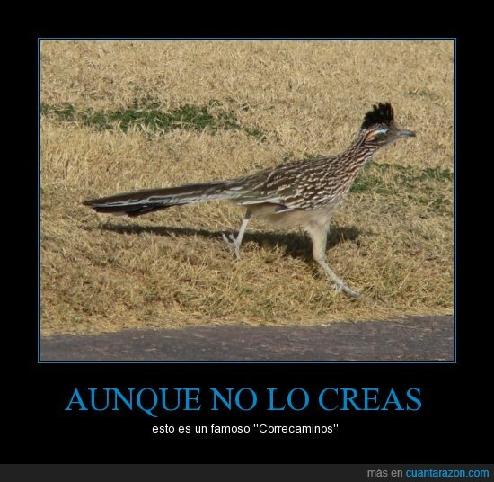 animal,clavado,correcaminos,coyote,pájaro,real