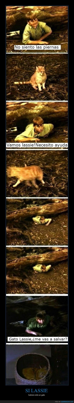 dormir,gato,lassie,muere,pequeño tim atrapado,perro,salvar,siestecica,son unos despegados