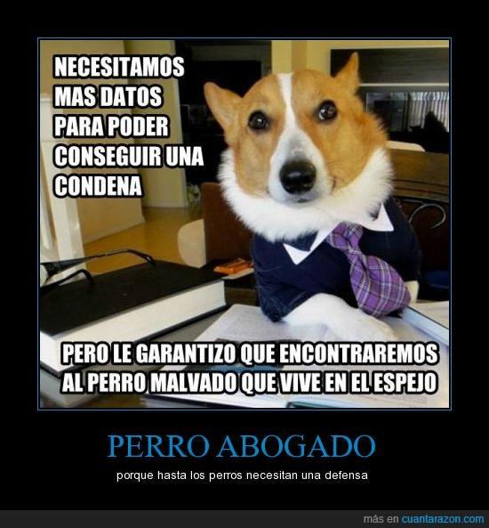 abogado,espejo,malvado,perro,perro abogado