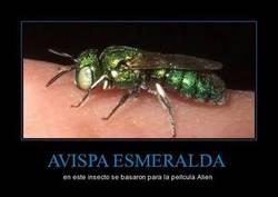 Enlace a AVISPA ESMERALDA