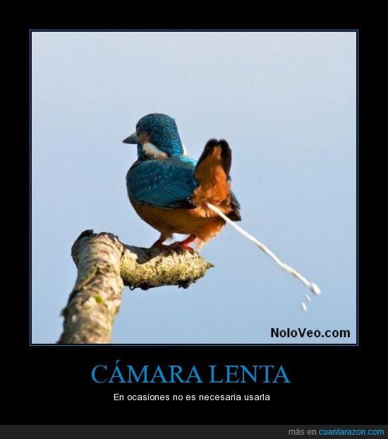 caca,cagar,cámara lenta,pájaro