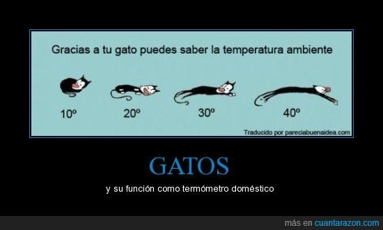 cerrado,encoge,estira,gato,pose,temperatura,tener,termometro