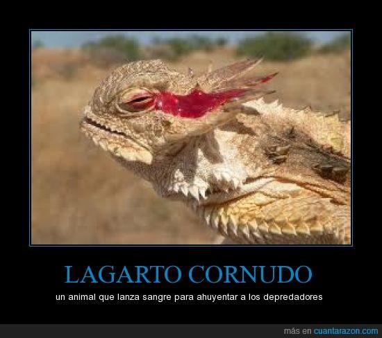 ataque,cornudo,defensa,horned,lagarto,lizard,ojo,sangre