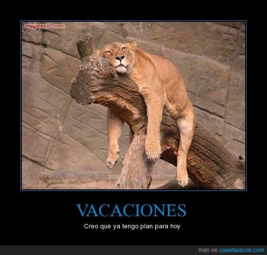 hacer,leona,rama,tronco,tumbada,vacaciones,vago