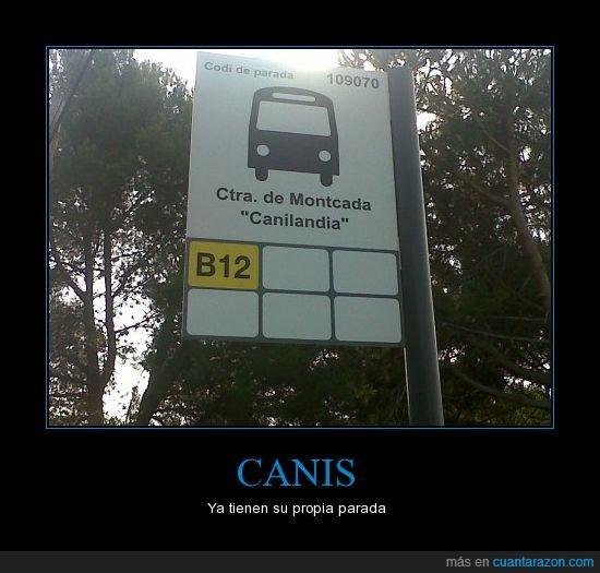 autobús,bus,canilandia,canis,parada