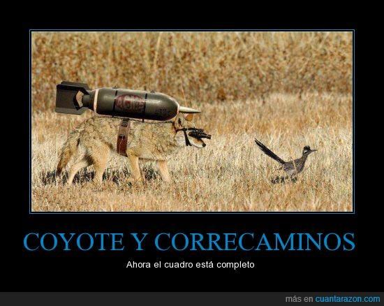 carne y hueso,correcaminos,coyote,real