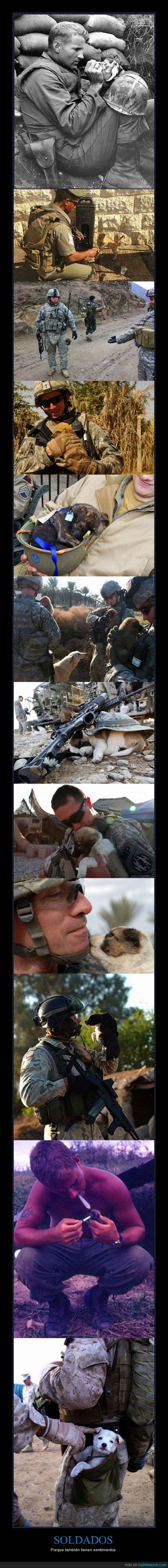 criar,cuidar,gatos,mascotas,perros,sentimientos,soldados