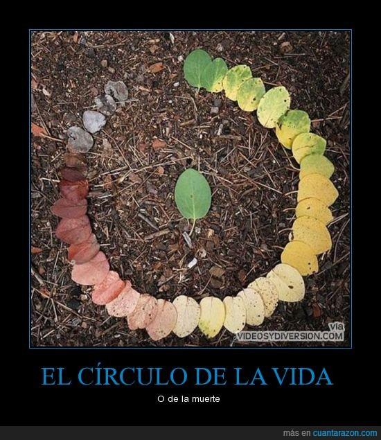 arbol,caer,circulo,color,hojas,marron,podrida,pudrir,seca,verde,vida