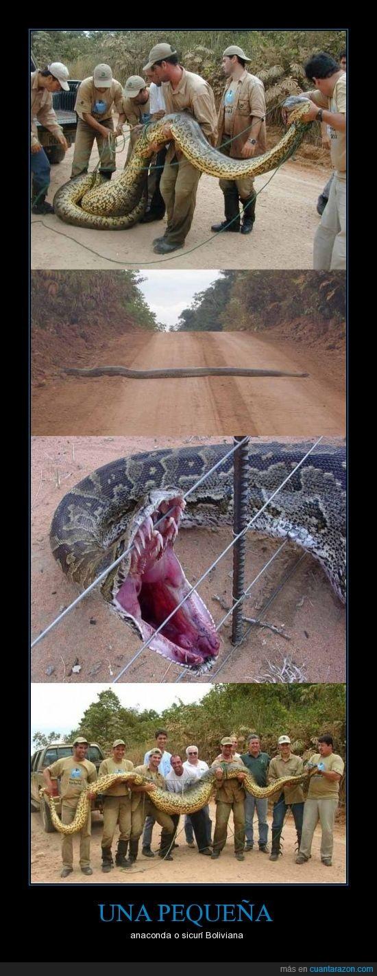anaconda,bolivia,Boliviana,pequeña,riberalta,sicurí