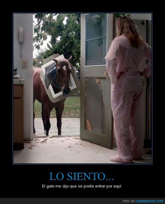 caballo,cabeza,engañado,fail,gatera,puerta,rompe