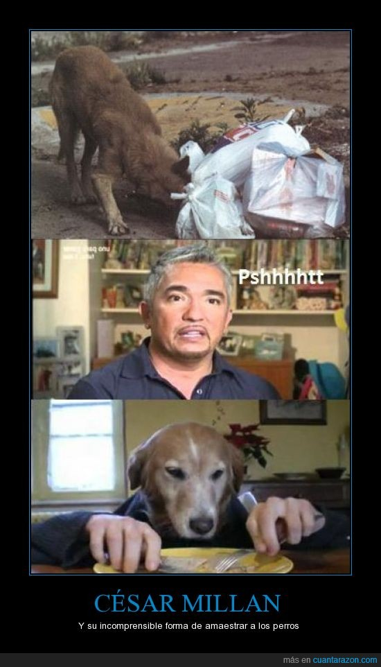 cesar millan,el encantador de perros,maestro,perros