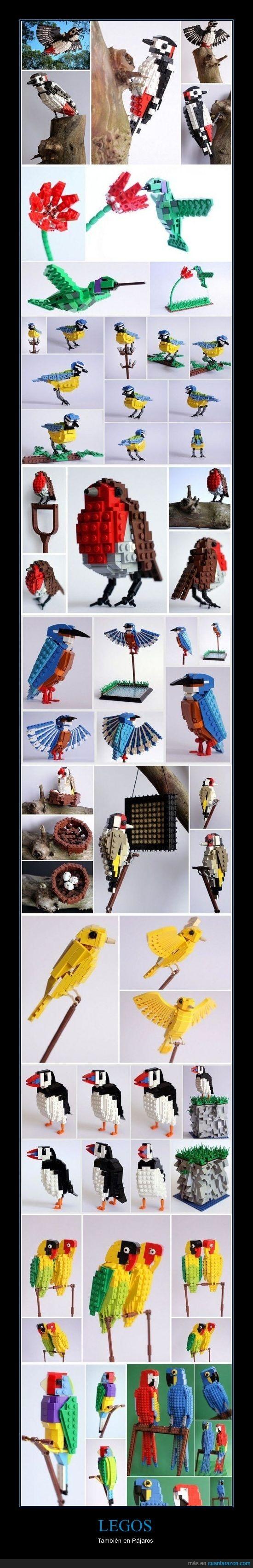 carpintero,colibri,lego,loro,pajaro,petirrojo