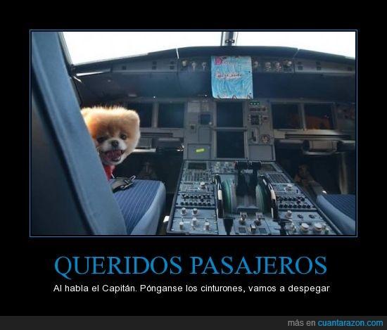 avión,cabina,perro,volar