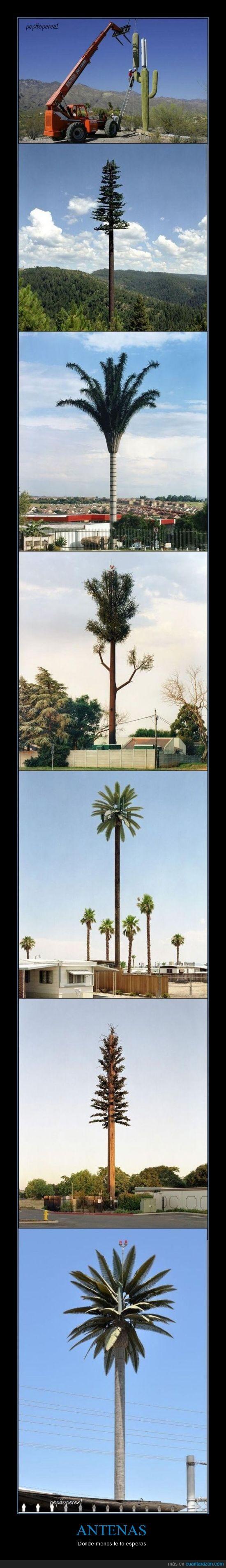antena,antenas,arbol,arboles,cactus,conspiracion,negocio,palmera