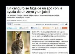 Enlace a ANIMALES