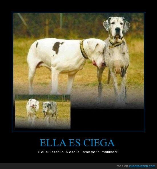 ayuda,ciega,ciego,lazarillo,perro