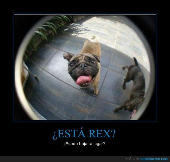 bajar,jugar,perros,rex