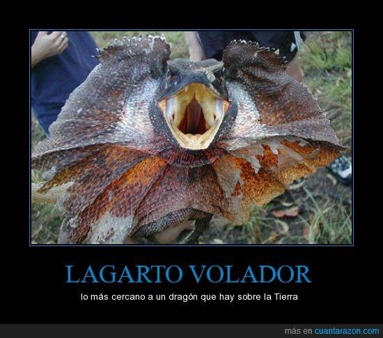 alas,donde esta Daenerys?,dragon,lagarto volador,volador