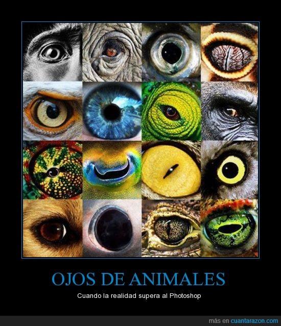 animales,especies,ojo,realidad
