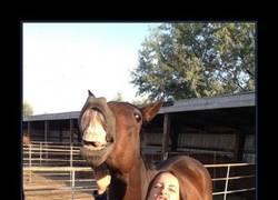 Enlace a HORSE FACE