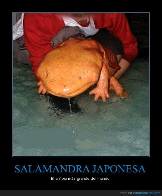japonesa,likitung,mazinger,pokemon,salamandra