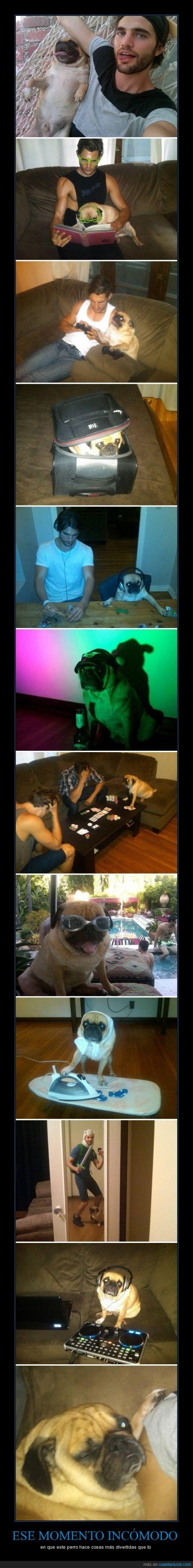 dj,fiesta,gafas,jugar,perro,poker,ps3