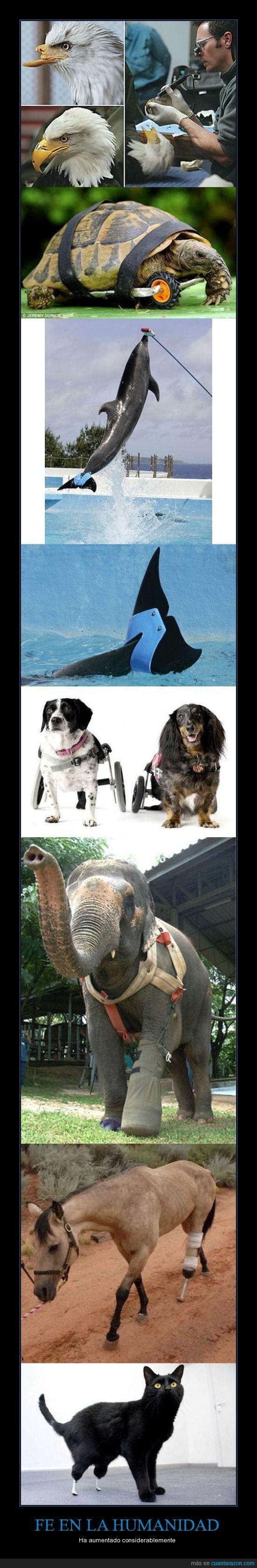 animales,aumentar,ayudar,discapacitados,elefante,fe,gato,hombre,humanidad,pata,protesis