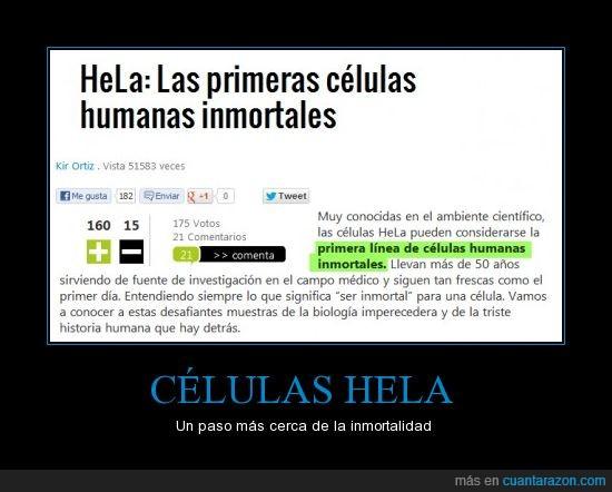 célula,descubrimiento,forever and ever,hela,humana,inmortal