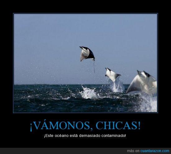 a volar,contaminación,mantarraya,océano,van al feliz país de las Mantarrayas,volar