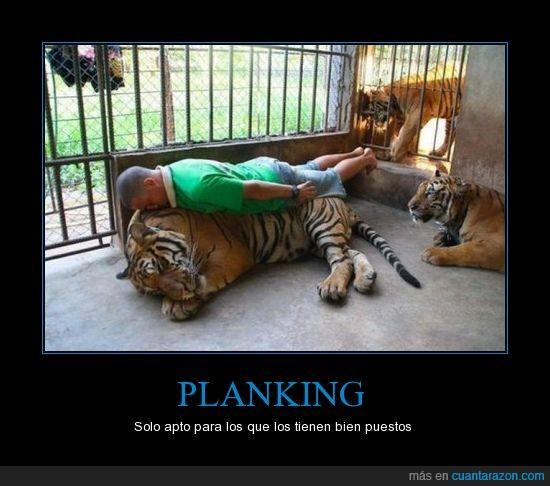 encima,jaula,planking,tigre,vaya huevos,zoo
