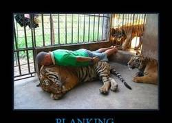 Enlace a PLANKING