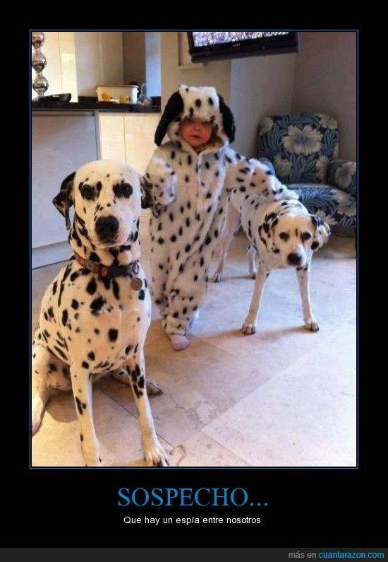 bebe,dalmatas,disfraz,espia,perros
