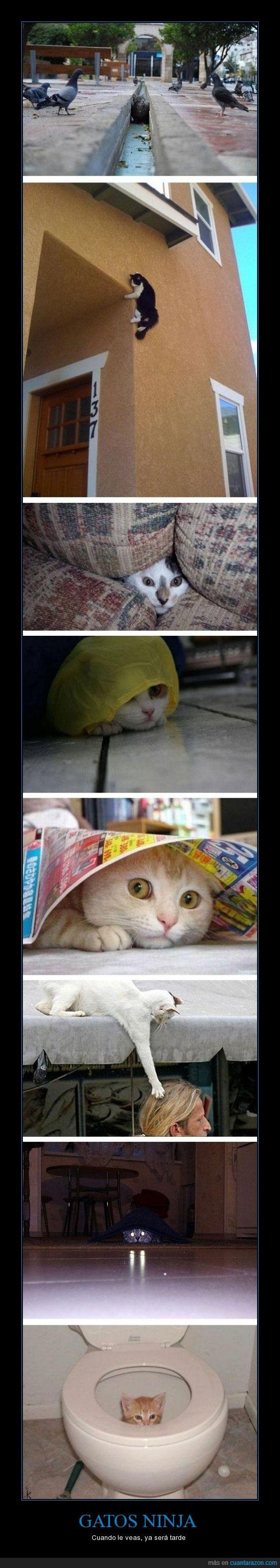 destrucción,gatos,muerte,ninja,planean algo seguro