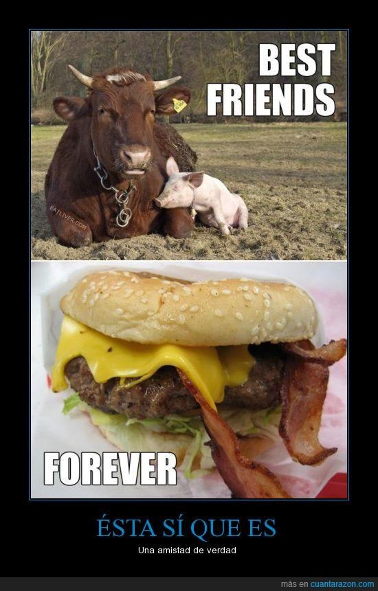 Amistad,Cerdo,Hamburguesas con tocino,Vaca,vegetarianos ofendidos en 3..2..1