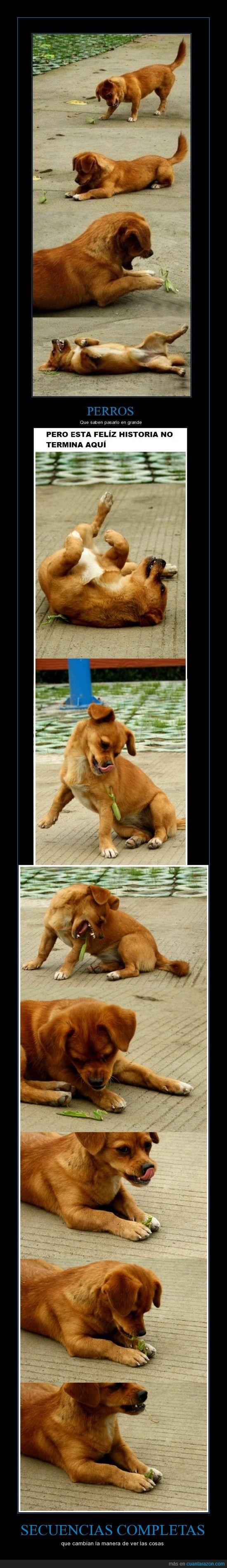 animales,cambiar,fotografia,mantiz,mascotas,perro malo pero bonito :3,perros