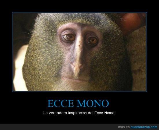 animal,ecce homo,mono,parecidos,razonables