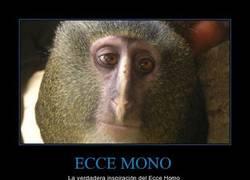 Enlace a ECCE MONO