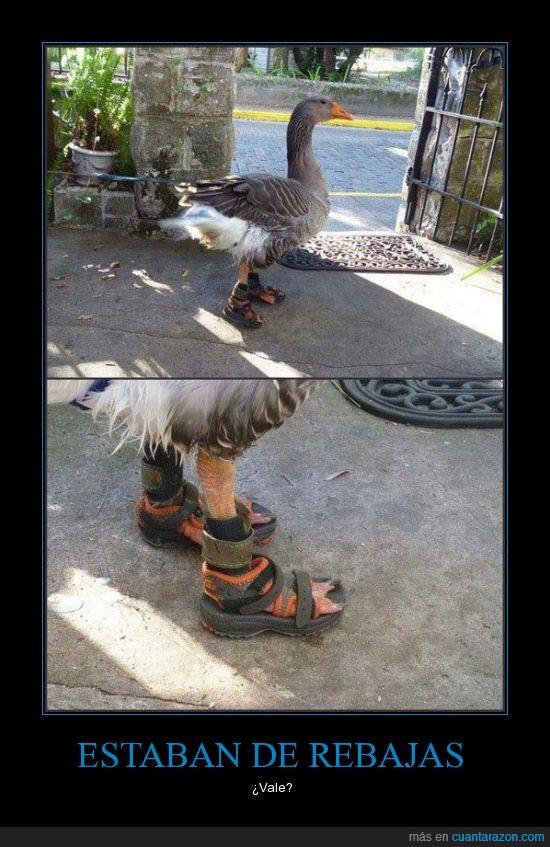 ganso,logica,pato con zapatos,sandalia,wtf?,zapatilla